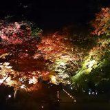 京都、山科の毘沙門堂のライトアップ行ってきました!