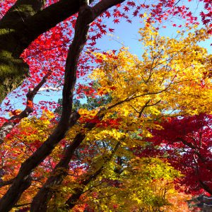 kyotoimage_00033