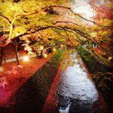 Autumn in Kyoto✨